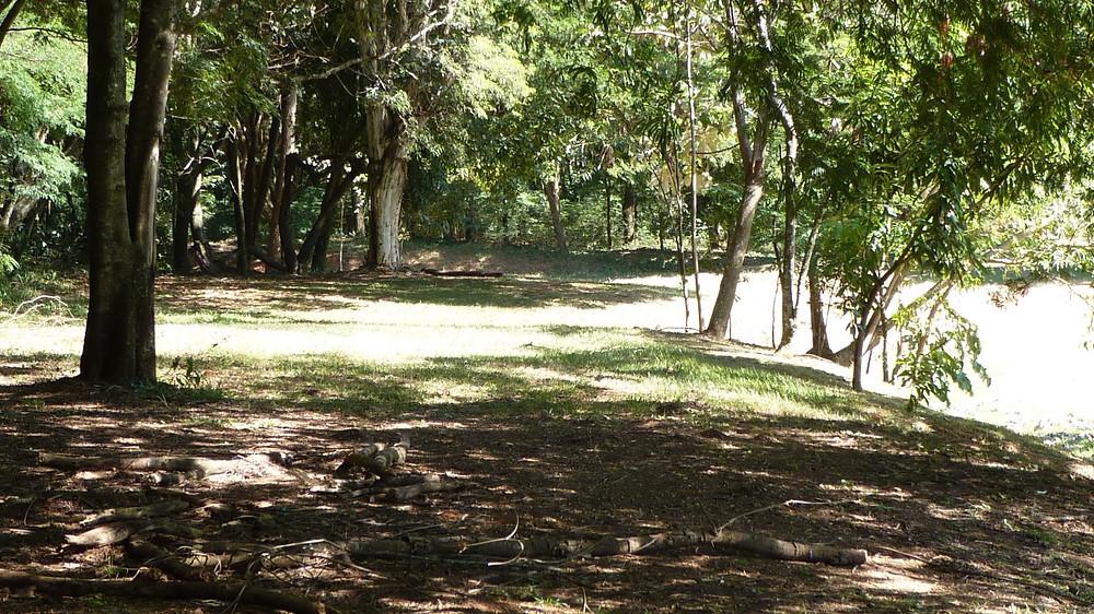 Foto de trilha aberta com grandes árvores envolta. O solo aparece sombreado no primeiro plano e verde e ensolarado mais ao fundo.