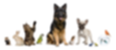 animals-banner.png