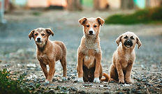 Dog Canine Animal Chiropractic