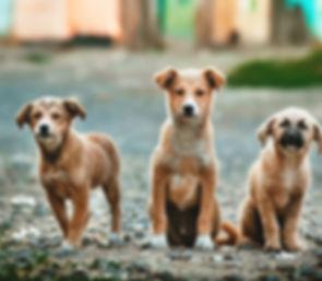 Opvoeding van uw pup