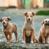 Tres cachorros grandes