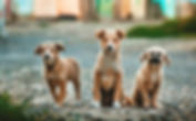   TameMe's Pet Services knows how difficult it can be to be away from your best friend, so I'm here to make that time as smooth as possible! I always enjoy being able to bring peace of mind to owners that are looking for excellent care for their pooch while they're away, so I would love to provide that care. Give TameMe's Pet Services a try and go about your business without guilt knowing full well your four-legged buddy is in great hands.