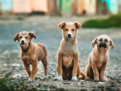 Heartfelt letter illustrates the generosity of HFL, animal shelter