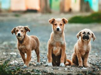 15 Tips para Entrenar a tu Perro