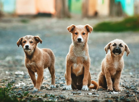 Repatriated Expats: What to Do with Pets?