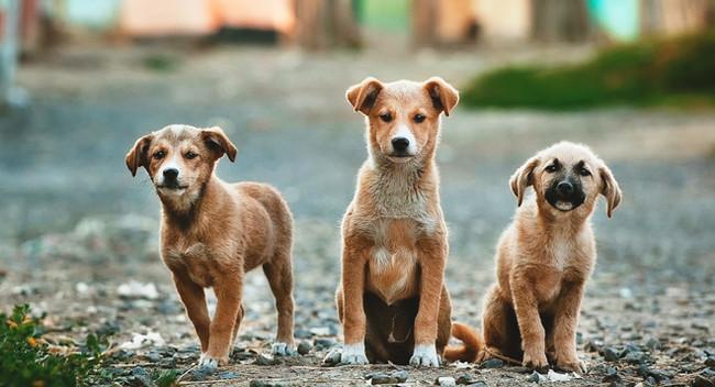 Licenciamento de cães no Canadá: 6 razões fundamentais