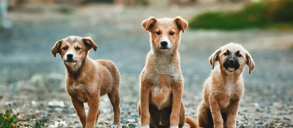 Puppy Mills and Irresponsible Breeders