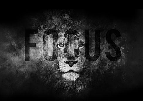 lion fast web NO TEXT.jpg