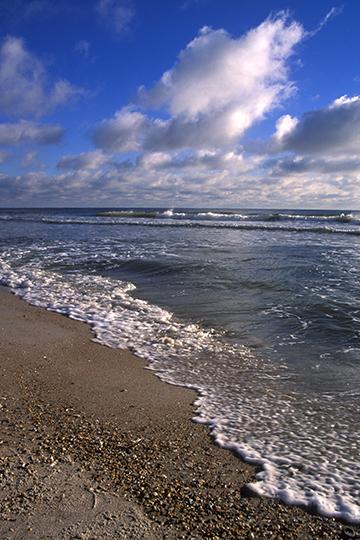 Fla Shore-4x6-90.jpg