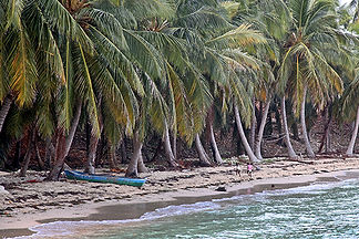 Palm Trees and Children, Ile-a-vache, Haiti, by Jonathan Jackson - Fine art photography for sale on www.mountainmultimedia.net