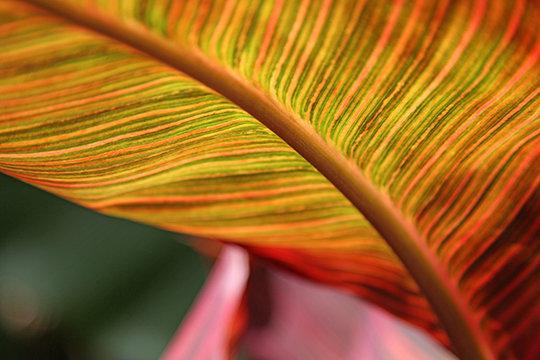"""Canna Abstract"" US Botanical Garden, DC"