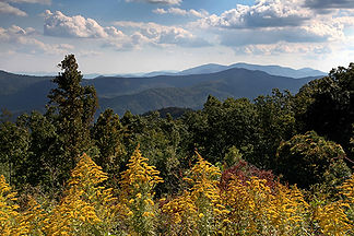 Parkway Goldenrod, Asheville, NC by Jonathan Jackson - Fine art photography for sale on www.mountainmultimedia.net