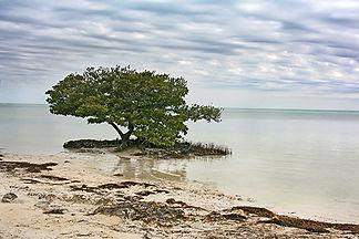 Ann's Beach, Islomorada Key, Fl by Jonathan Jackson - Fine art photography for sale on www.mountainmultimedia.net