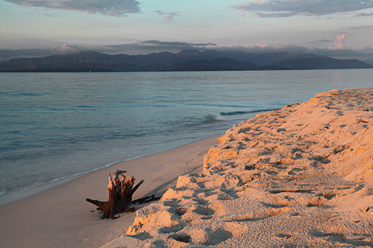 """Driftwood"" Ile-a-vache, Haiti"