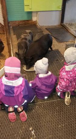 Unger hilser på grisen Elvira