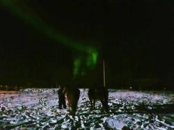 Des aurores boréales