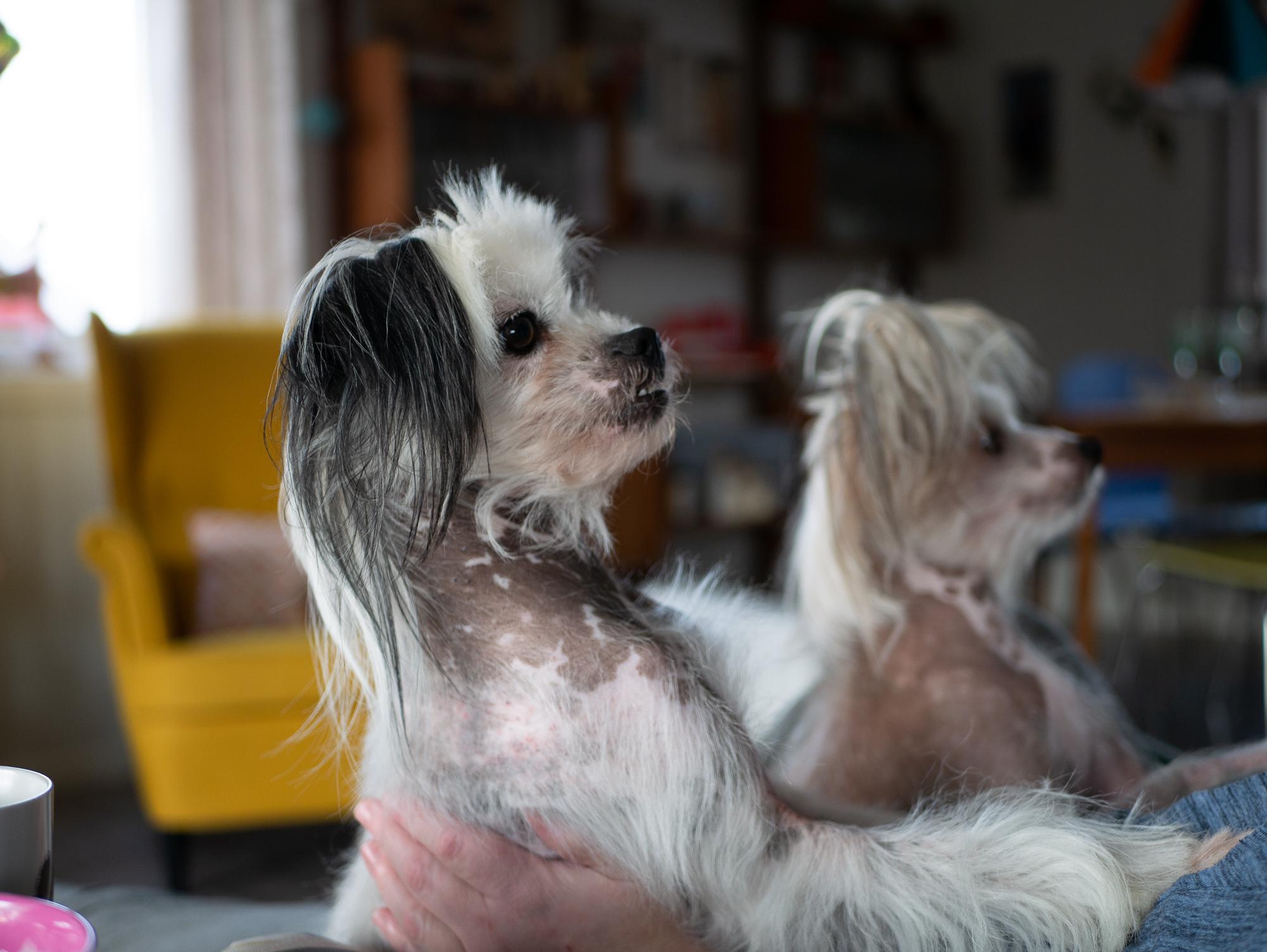 Vilma og Viola