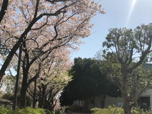 春がきました