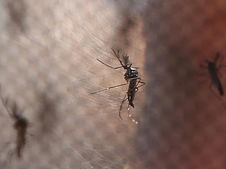 Capital paulista registra três vezes mais casos de dengue no primeiro semestre do que em 2020