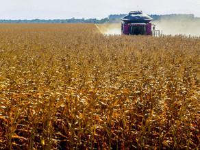 Governo anuncia Plano Safra com R$ 251,2 bilhões para o agronegócio