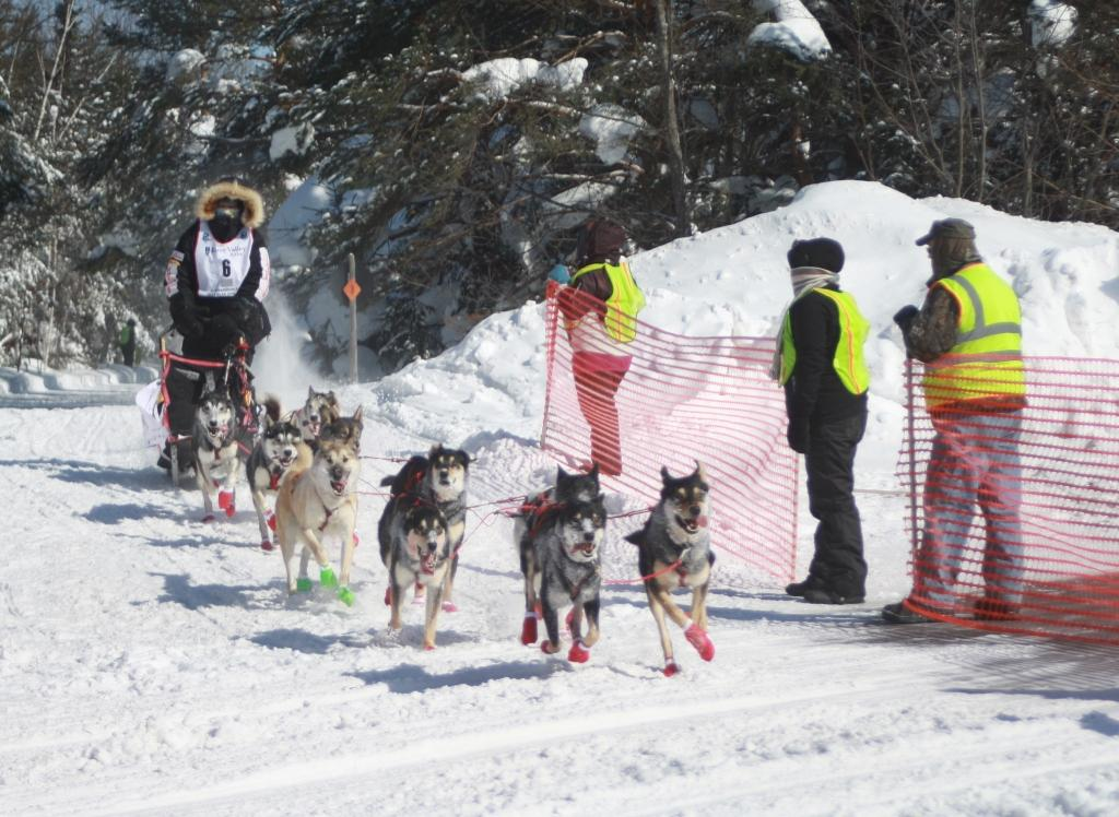 Copper Dog Race