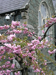 blossom at church.JPG