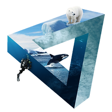polar without background.png