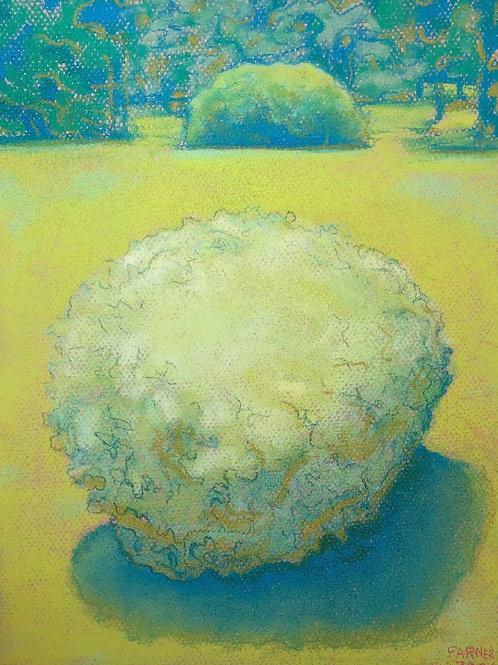 "David Farner-""Lonely Little Bush"""