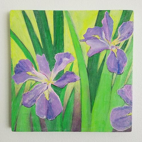 Lisa D. Watson-Louisiana Iris