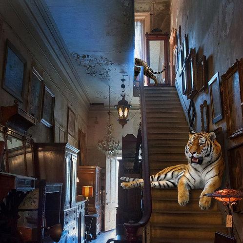 """Claire Barrett-""""Tigris Antiquus"""""""