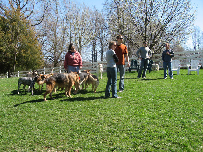 DogParty09a.jpg