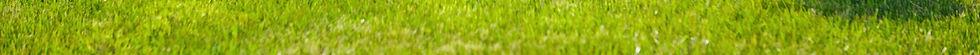 Grass_edited.jpg