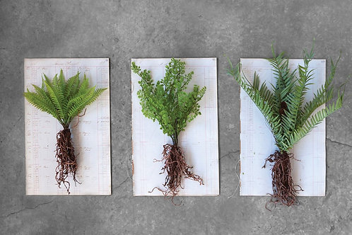 Faux Fern w/ Exposed Root