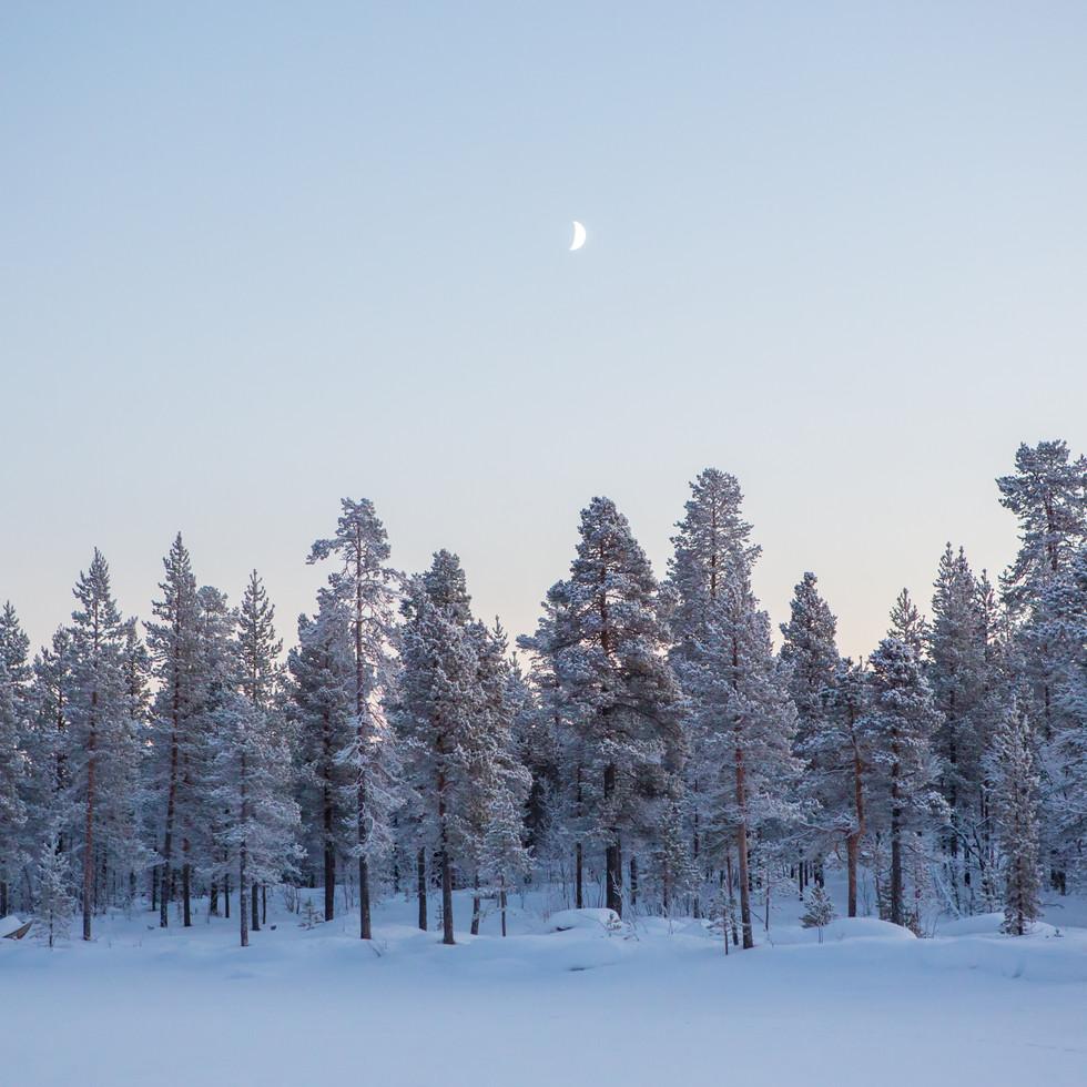 Arctic Circle at Noon