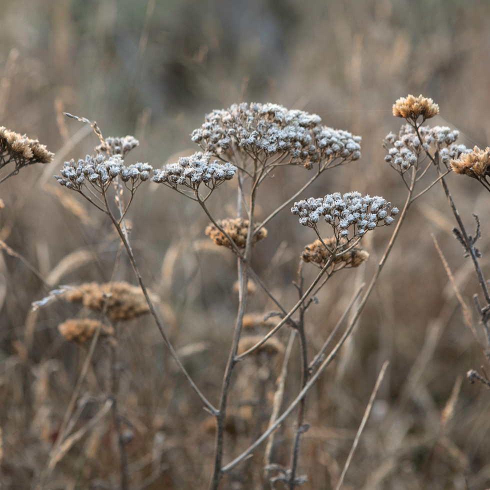 Sea Ranch Wildflowers