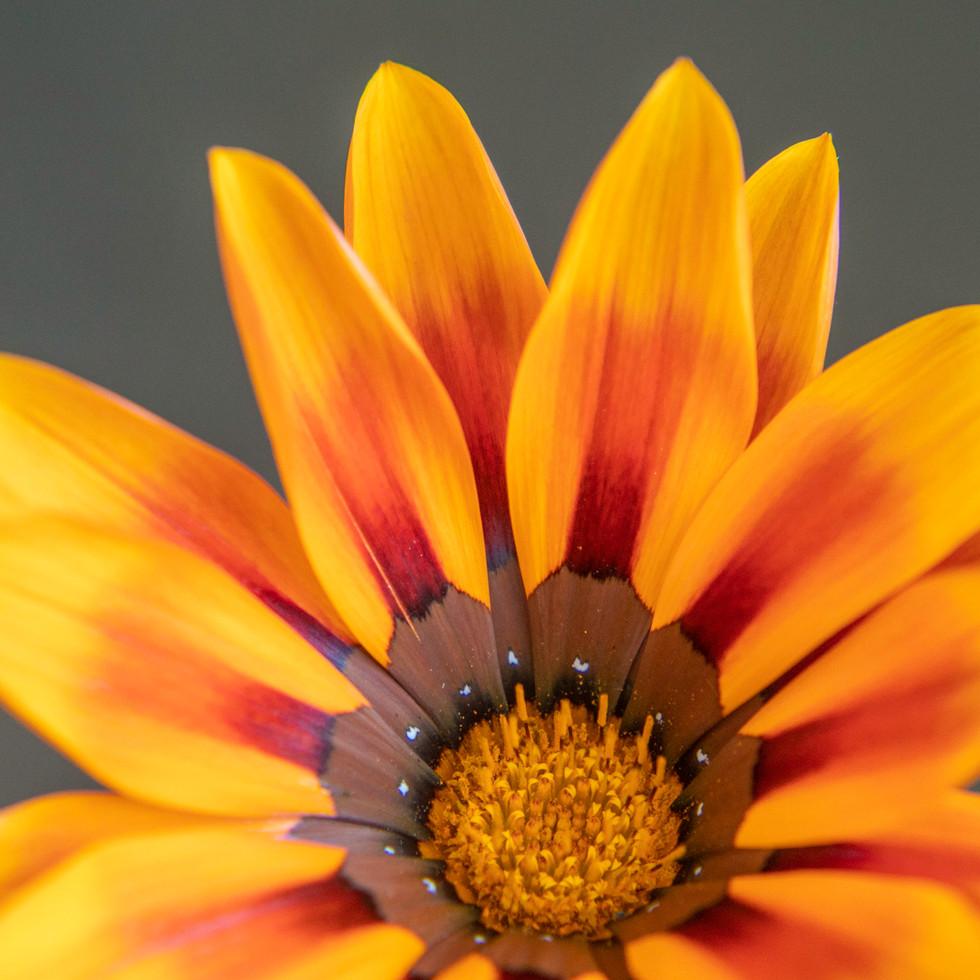 Wildflower #1