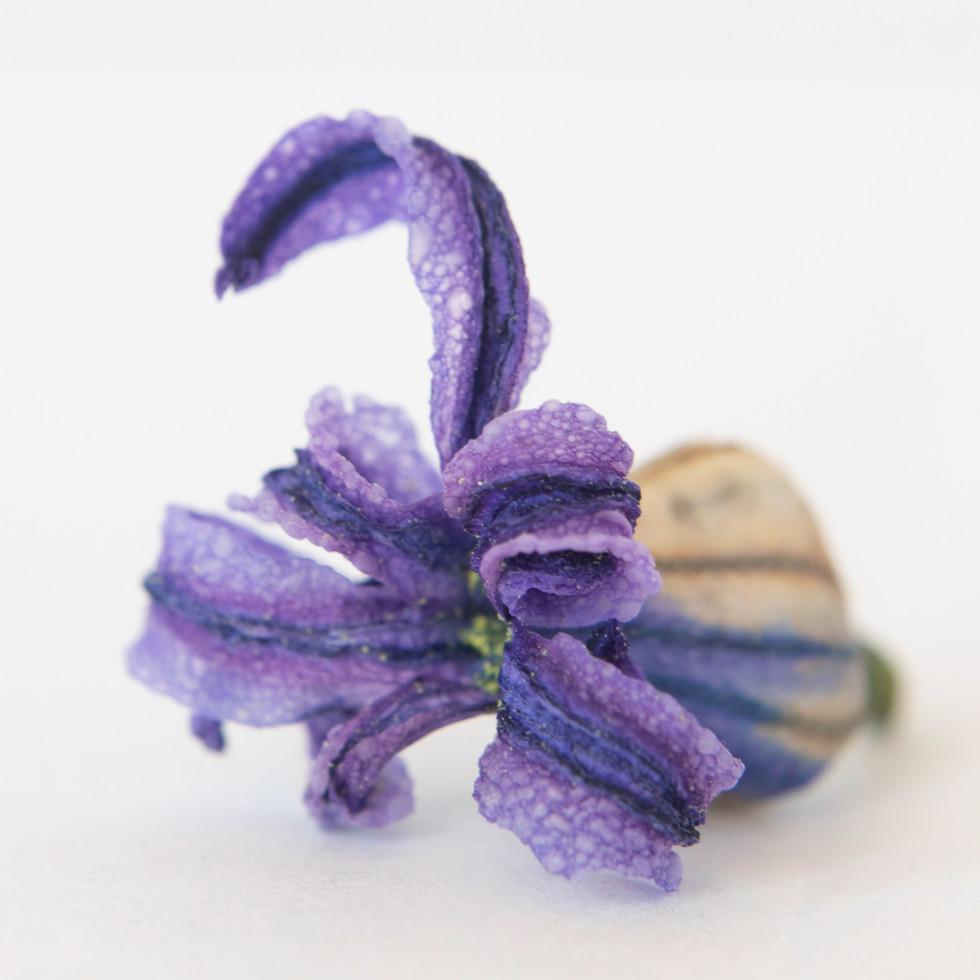 Purple Squid #1