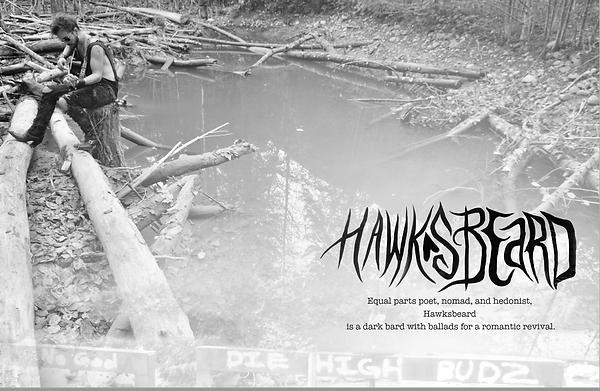 Hawksbeard 2-3.png