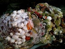 Cafe/Restaurant Composting