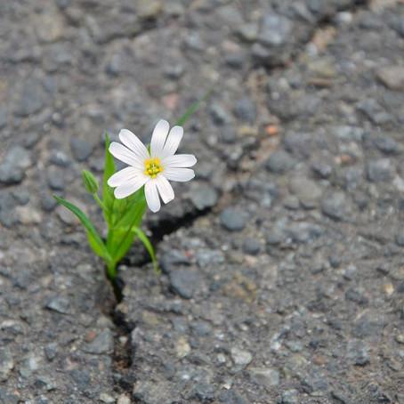 Resiliência, o que é e qual a diferença que pode fazer na sua vida