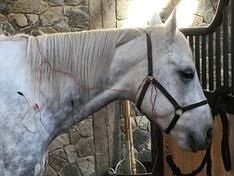 Electro Acupuncture - 50%.jpg