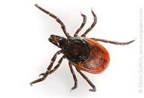 The Trouble with ticks...
