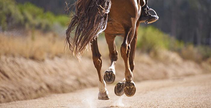 horse running.jpg
