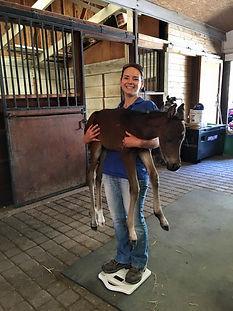 Yana and foal.jpg