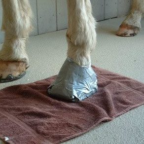 When is a hoof abscess not a hoof abscess?