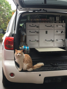Kitty in Truck.JPG