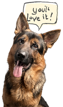 GermanShepard_isolated_SM_bubble2.png