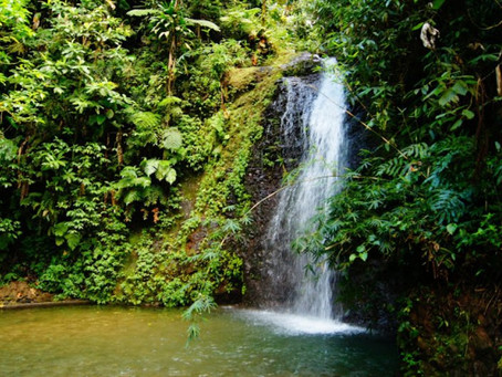 Rainforest Tour le Mardi 30 Avril 2019