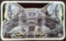 WOLF patch pic web.jpg