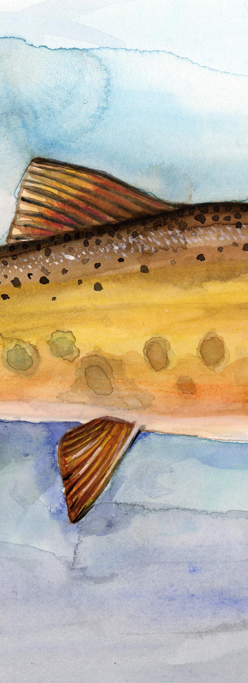 Western Slope Cutthroat Troat